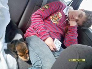 Basset Hound in casa - puppy basset in auto