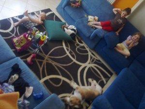 Basset Hound in casa - basset e bimbi